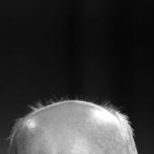 L43036 Bald head