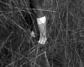 L44927 sock in grass